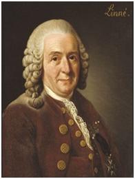 18th Century Wigs